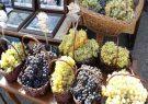 جشنواره «انگور و دوشاب» در تفرجگاه عینالی برگزار میشود
